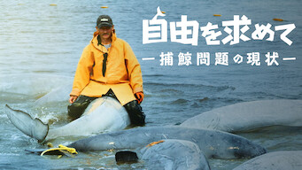 自由を求めて ー捕鯨問題の現状ー