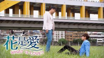 花是愛 WHAT IS LOVE?