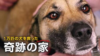 1万匹の犬を救った奇跡の家