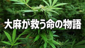 大麻が救う命の物語